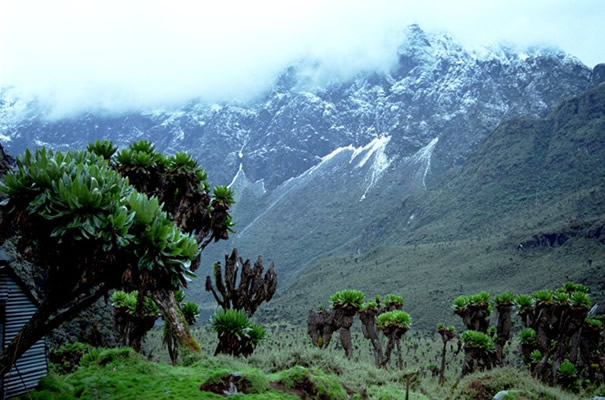 Rwenzori Mountain
